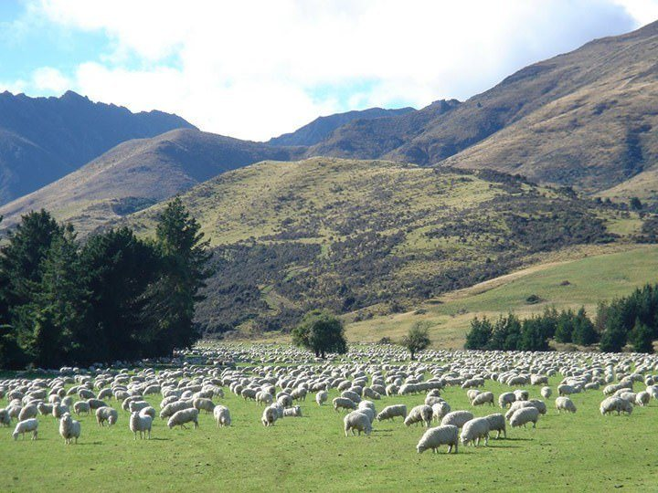 Sheep-Farms-Soutland.jpg#asset:5108