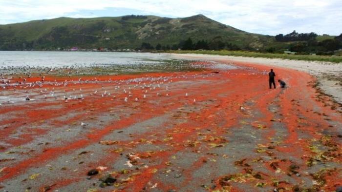 Te-Rauone-Beach-1.jpg#asset:8020