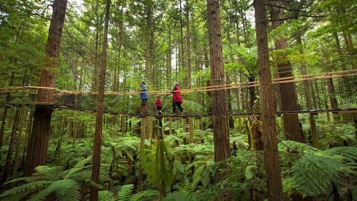 Treewalk-Rotorua-2-1.jpg#asset:7887