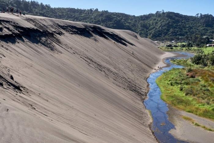 bethells-beach-sand-dunes-1-1.jpg#asset:7858