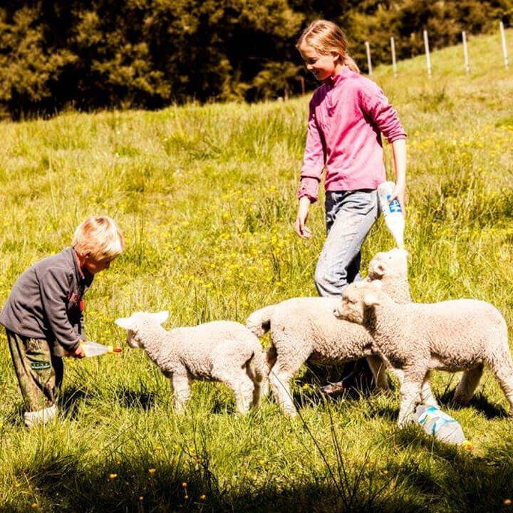 children-lambs.jpg#asset:4999