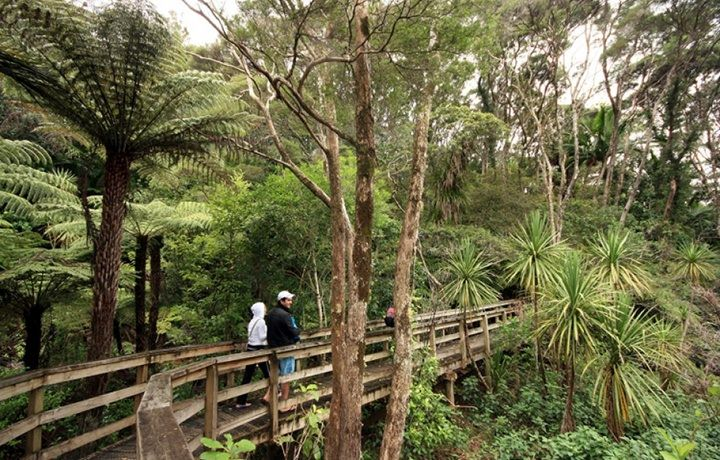discover-aotea-track-great-barrier-islan