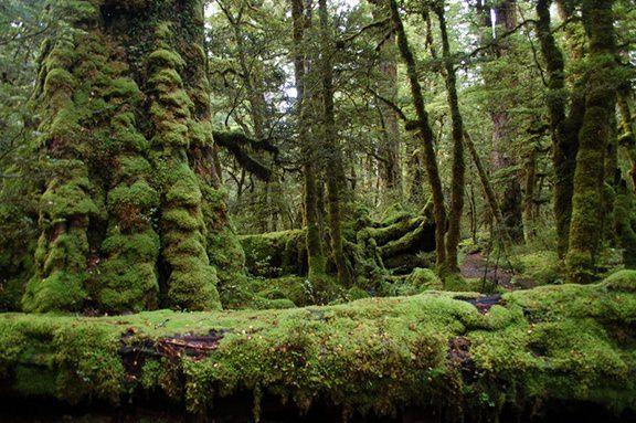 fiordland.JPG#asset:5072