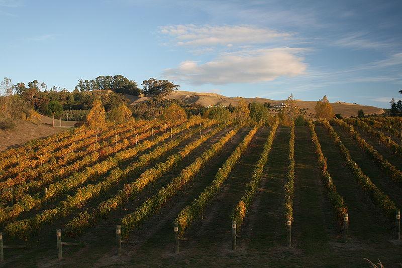 hawkes-bay-wines2.jpg