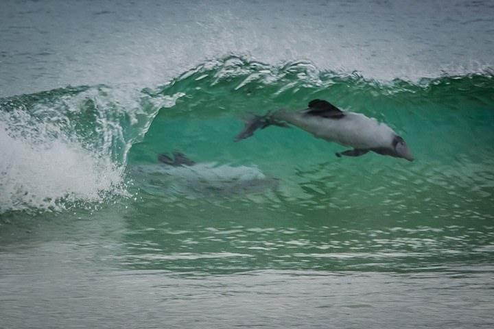 hector-dolphins-porpoise-bay.jpg#asset:4