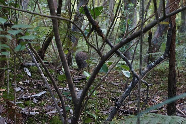 kiwi.JPG#asset:5116
