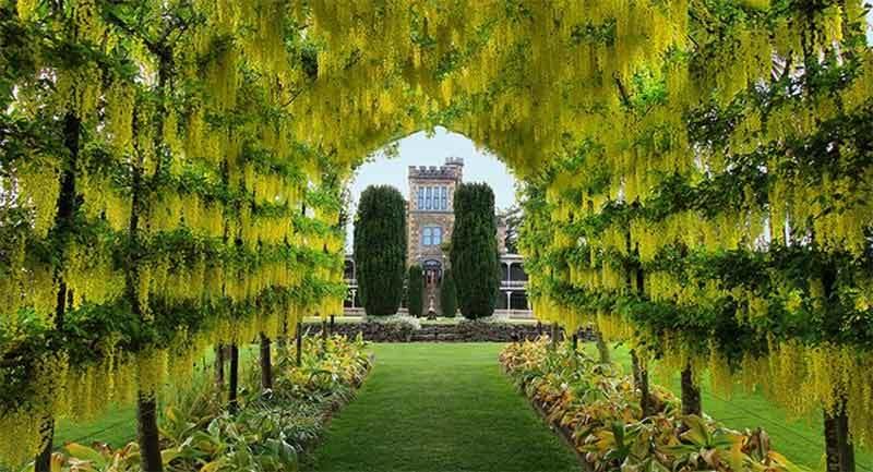 larnach-castle-gardens.jpg#asset:7243