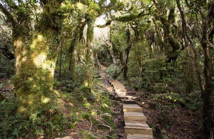 mangorei-goblin-forest-1.jpg#asset:8010