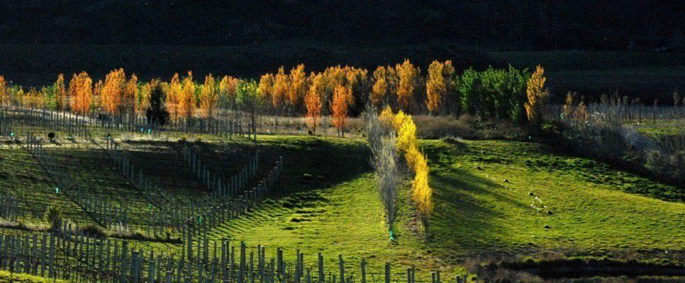 maori-point-vineyard-central-otago.jpg#asset:4598