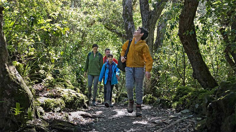 milford-sound-kids-bush-walk.jpg#asset:6259