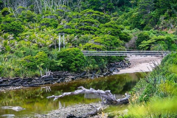 oparara-swingbridge-1.jpg#asset:8050