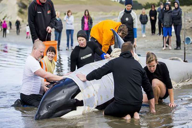 orca-2-blenheim1.jpg