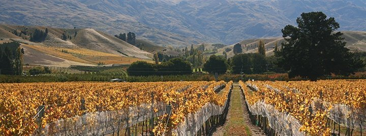 otago-wine-Wooing-Tree-Autumn.jpg#asset: