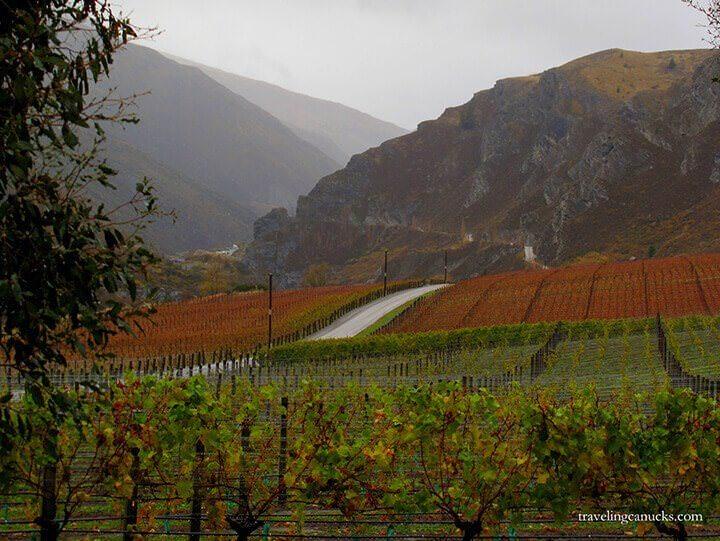 otago-wine5.jpg#asset:4640