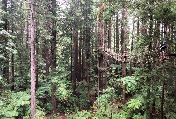 redwoods-ROT.jpg#asset:7870