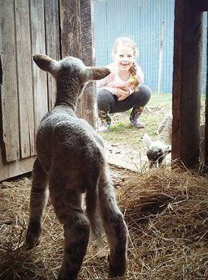 sarah-bartlett-lamb.jpg#asset:4988