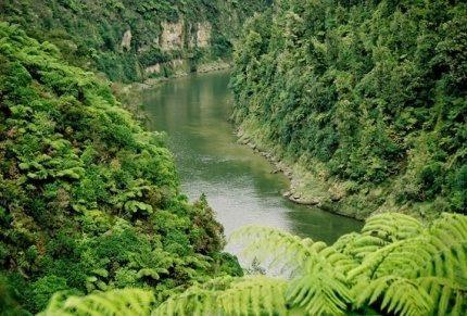the-whanganui-river-road-pic.jpg#asset:4