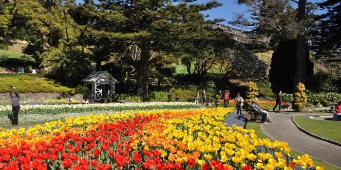 tulips-botanic-garden_wlg-1.jpg#asset:8187
