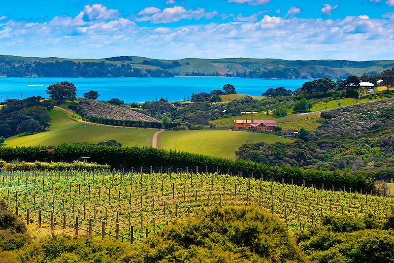 Food-Wine-NZ-2.png1