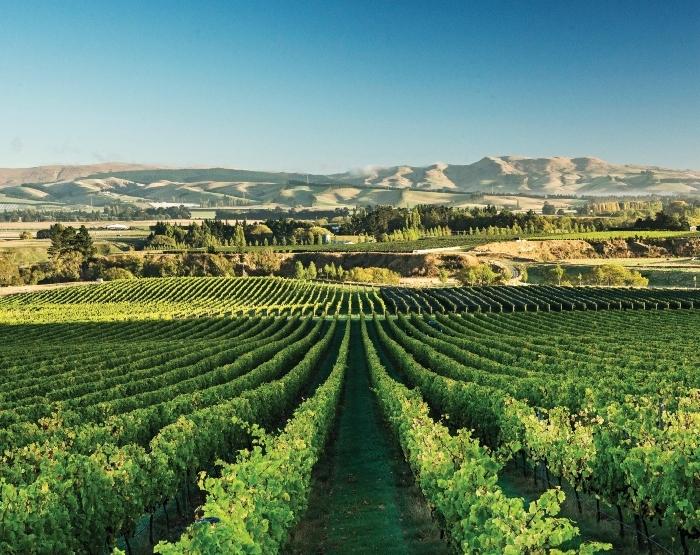 vineyards-1.jpg#asset:8152