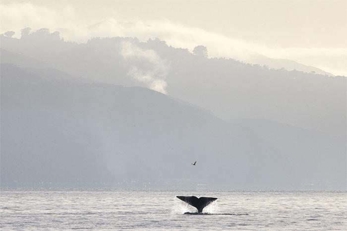 wellington-whale.jpg#asset:6567