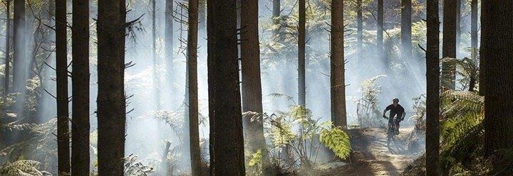 whakarewarewa-the-redwoods.jpg#asset:492