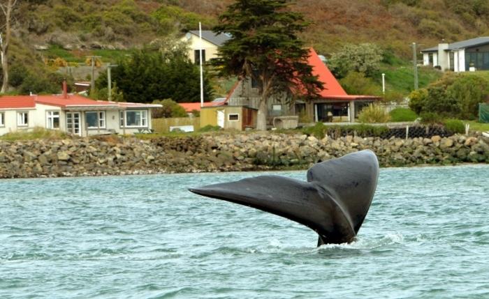 whale-Te-Rauone-Beach-2.jpg#asset:8022