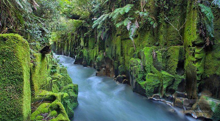 whirinaki4-Te-Whaiti-Nui-Atoi-Canyon.jpg