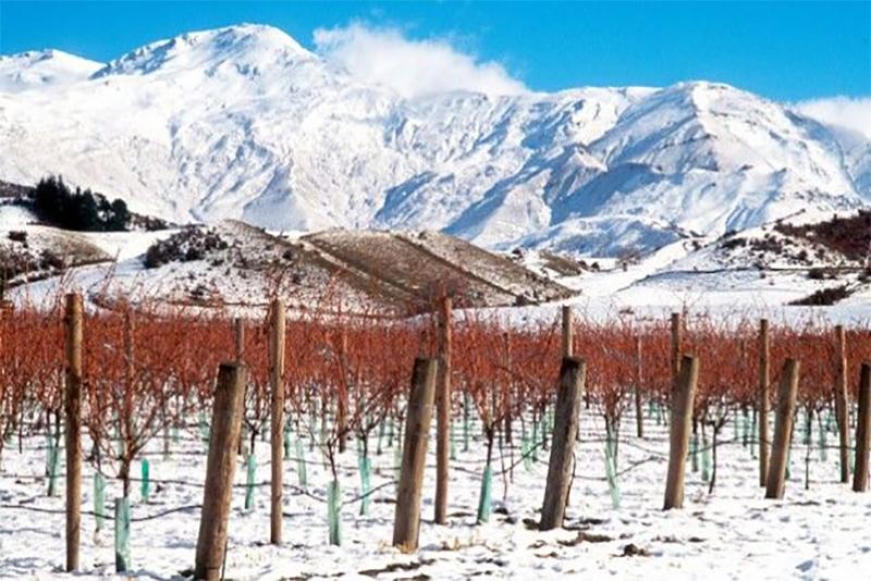 winter-vineyard-alternative.jpg#asset:5633